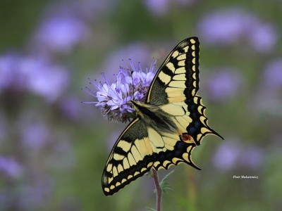 Opowieść ósma: W królestwie motyli