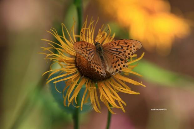 Opowieść dziewiąta: W królestwie motyli (2)