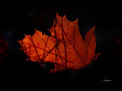 Opowieść dwunasta: W żółtych płomieniach liści