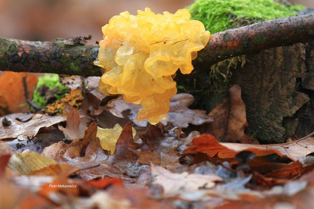 Opowieść piętnasta: Tajemnice leśnej ściółki (3)
