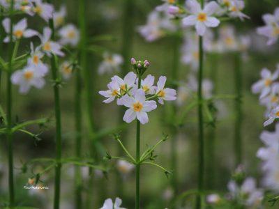 Opowieść osiemnasta: Wiosenne starania o przedłużenie gatunku