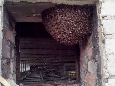 Pszczela przeprowadzka