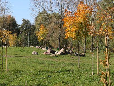 W cieniu dobrego drzewa