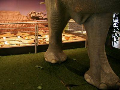 Dopieszczanie słonia