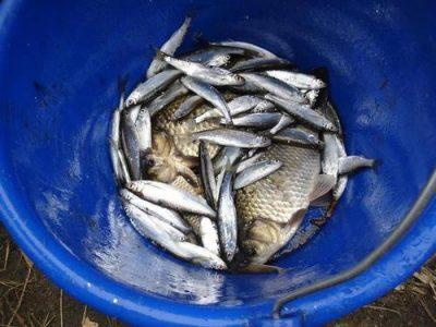 Wszystkie rybki małe i duże