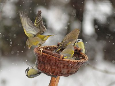 Zima w karmniku